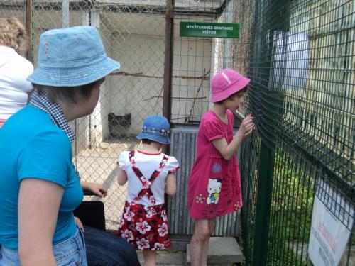 8 šeimynos mergaitės stebi gyvūnus