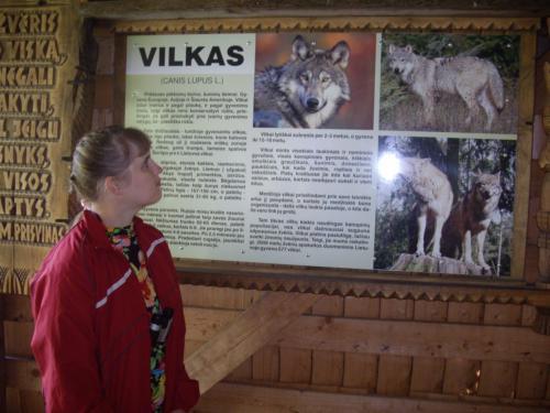 Justė domisi informacija apie vilkus