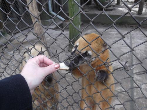 Maitiname gyvūnus